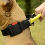 Staffy Nylon Dog Collar UK