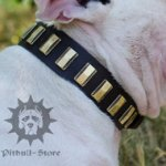 Designer Dog Collar of Leather for Bull Terrier, Custom Made