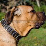 Cane Corso Dog Collar of Leather with Pyramids and Spikes