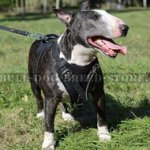 Protection Dog Harness for Bull Terrier Attack and Agitation