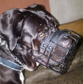 Cane Corso Muzzle Wire Basket with Antifreeze Rubber Cover