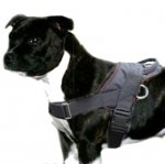 Staffordshire Bull Terrier Nylon Harness for Tracking & Pulling
