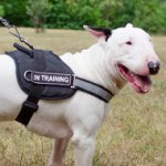 Reflective Dog Harness for Bull Terrier Training and Walking