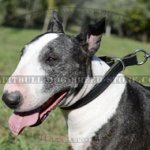 Dog Control Collar for Bull Terrier Obedience, Leather Choker