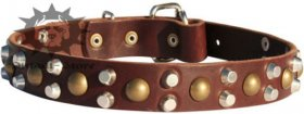 Studded Dog Collar for Bull Terrier with Pyramids and Studs