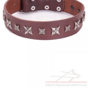 "Leather Dog Collar for Pitbull ""Stellar Fairy"" FDT Artisan"