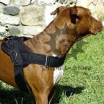 Pitbull Dog Harness for Pulling of Durable Nylon