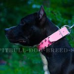 Pink Leather Dog Collar for Beautiful Female Amstaff
