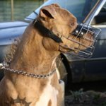 Wire Dog Muzzle for Staffordshire Bull Terrier Walking