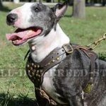 Designer Dog Harness of Gladiator Style for Bull Terrier