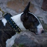 Funky Spiked Dog Collar for Bull Terrier