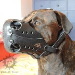 Agitation Muzzle with Big Nose Holes for Alano Espanol Dog