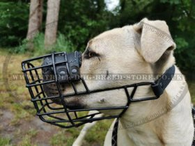 Bestseller! Antifreeze Staffy Wire Muzzle Covered with Rubber
