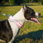 Girlish Pink Leather Dog Collar for Your Star