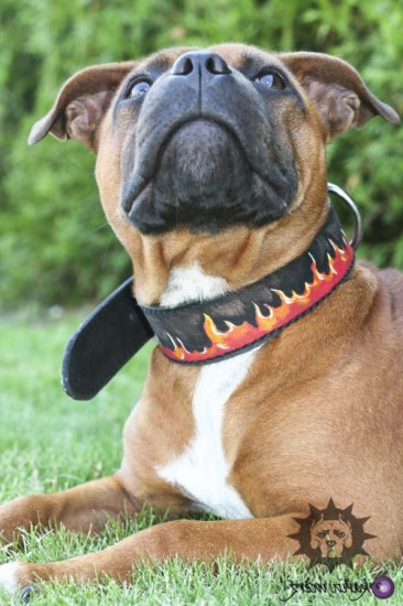 Exclusive Painted Leather Dog Collar for Pitbull and Staffy