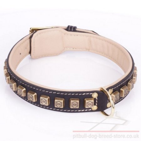 "Thick Pitbull Dog Collar ""Cube"" with Brass Adornments"
