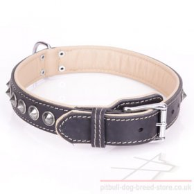 "Staffy Studded Dog Collar ""Cone"" of Nappa Padded Black Leather"