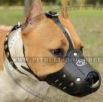 Amstaff Muzzle UK, Leather Padded for Everyday Usage