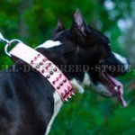 Incredibly Stylish Pink Studded Dog Collar