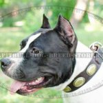 Designer Dog Collar for Amstaff with Vintage Adornments