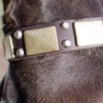 Wide Leather Dog Collar with Brass & Nickel Decorations