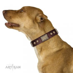 Bestseller! Pitbull Training Leather Collar of Extra Durability