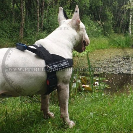 Bestseller! Stop Your Dog Pulling with Nylon Harness