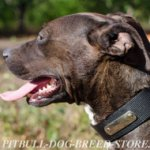 Dog Collar of Nylon with Name Plate for Pitbull, Personalized