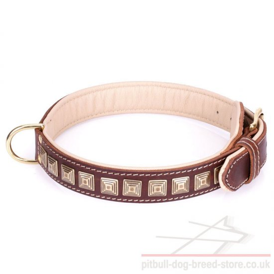 Wide Pitbull Collar
