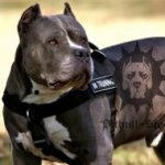 Bestseller! Dog Harness for Pitbull Training Nylon with Patches