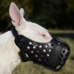 Dondi Plus Leather Dog Muzzle for Bull Terrier