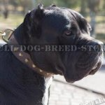 Cane Corso Leather Collar with Row of Brass Cones