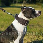 "XXL Dog Collar of ""Gladiator"" Style for Pitbull"