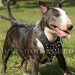 Spiked Dog Harness of Genuine Leather for English Bull Terrier