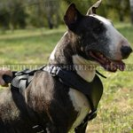 Bull Terrier Harness for Attack, Agitation, Soft Padded