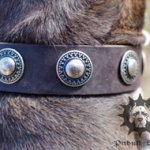 Bestseller! Designer Leather Dog Collar for Staffy with Circles