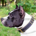 Padded Dog Collar for Amstaff, Luxury Spiked Nappa Lined Leather
