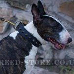 Studded Dog Collar of Simple Gorgeousness for Bull Terrier