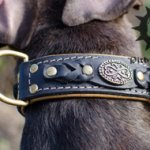 Luxury Dog Collar Nappa Padded, Decorated for Stafford, Handmade