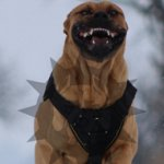 Bestseller! Large Dog Harness for Presa Canario