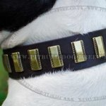 Trendy Dog Collar of Leather with Brass Plates for Amstaff