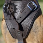 Pitbull Harness for Sale in Brown Color, UK Bestseller
