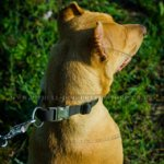 Quick-Release Dog Collar for Training In Any Weather