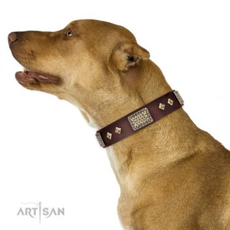 Pit Bull Training 2 Ply Leather Collar of Extra Durability
