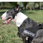 Stop Your Dog Pulling with Dog Training Harness for Bull Terrier