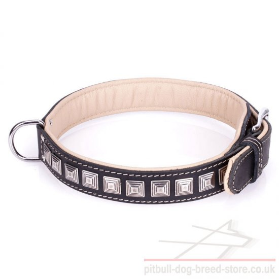 Collar for American Staffordshire Terrier