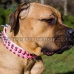 Cane Corso Collar Female of Pink Leather with Spikes and Studs