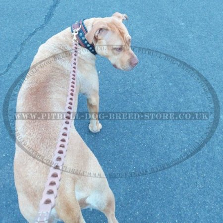 Super Strong Leather Dog Lead with Nappa Padded Handle