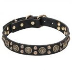 Pitbull Collar Leather with Bohemian Design Brass Studs