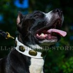Royal White Leather Dog Collar for Amstaff
